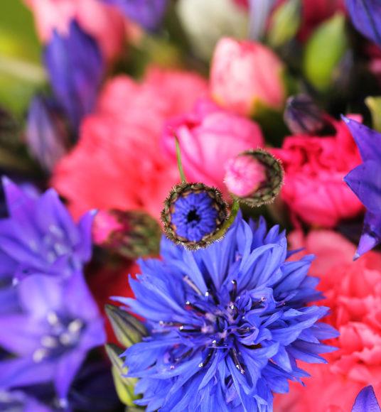 Cornish mixed flowers
