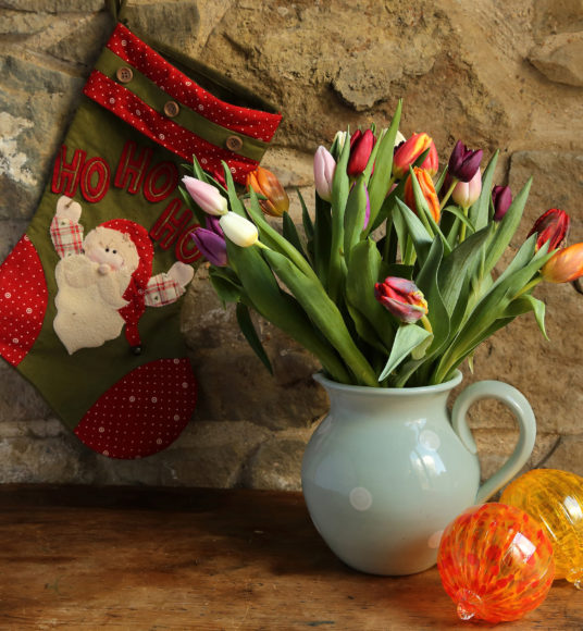 Tulips for Christmas