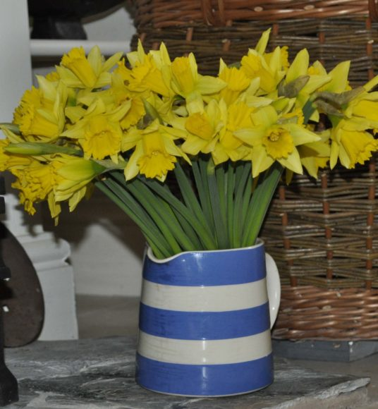 Daffodils from Cornwall