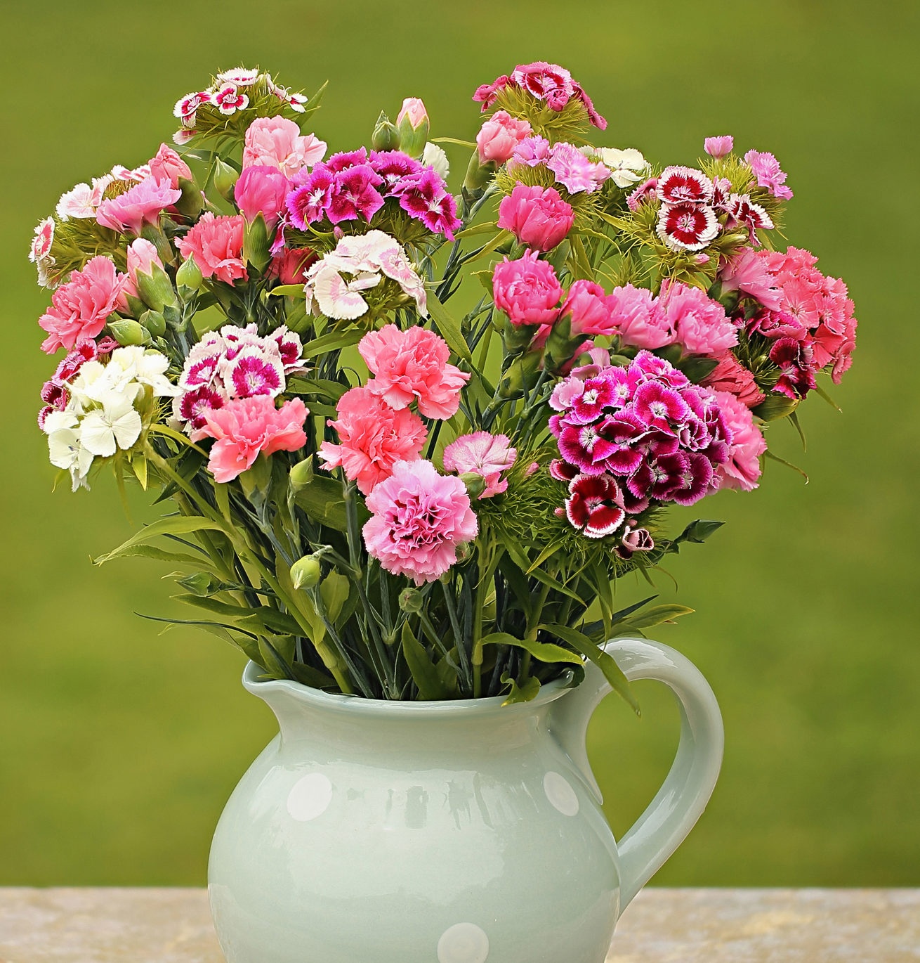 Pinks And Sweet William Cornish Blooms
