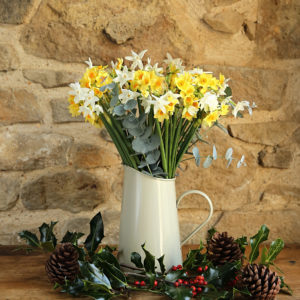 Christmas Scented Narcissi