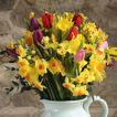Daffodils, Tulips and Narcissi