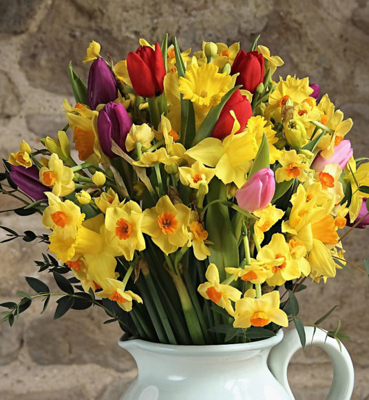 Daffodils, Tulips and Narcissi