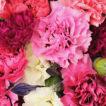 Close up of pinks