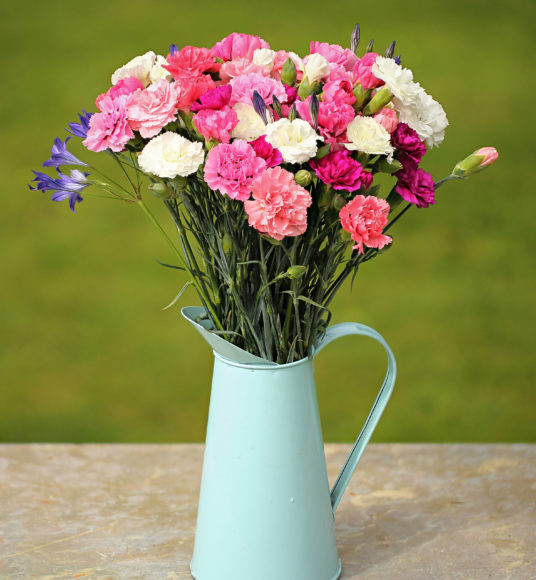 Jug of Cornish Pinks