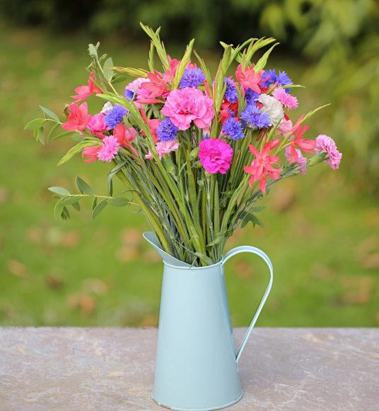 cornish pinks, kaffirs, cornflower