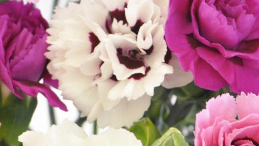 Cornish pinks