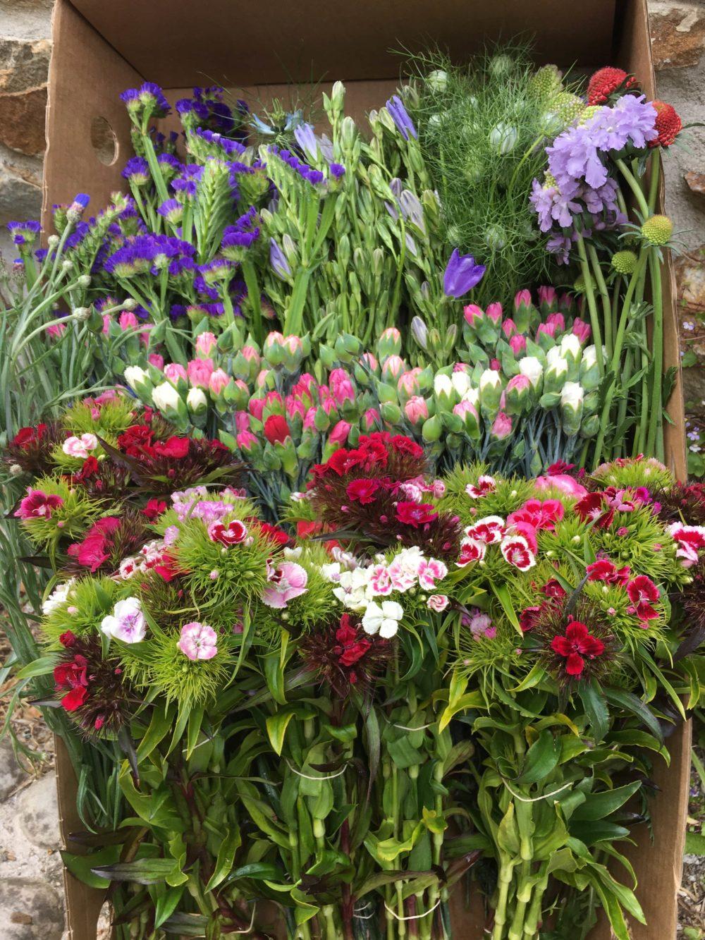 Diy Wedding Flowers.Party Or Diy Wedding Flowers